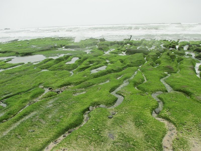 野柳から淡水までの北海岸周遊観光