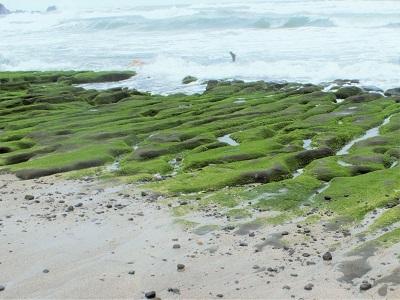 老梅緑石槽